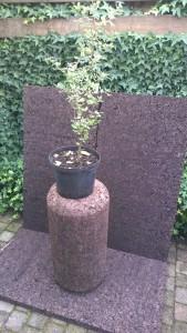 0003_Pro Suber_cadeau_sinterklaas_kerst_kurkeiken te koop_Quercus Suber_montado_cork oak_insulation_geëxpandeerde kurk isolatie_isoleren met kurk