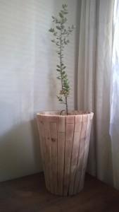 #00001_Jori_A_Pro Suber Boom_kurkeik_Quercus Suber_montado_cork oak_insulation_geëxpandeerde kurk isolatie_isoleren met kurk_www.prosuber.com